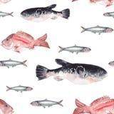 πρότυπο ψαριών άνευ ραφής Στοκ εικόνες με δικαίωμα ελεύθερης χρήσης
