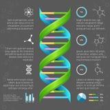 Πρότυπο Infographic με τη δομή DNA για διανυσματική απεικόνιση