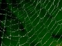 πρότυπο spiderweb Στοκ εικόνες με δικαίωμα ελεύθερης χρήσης