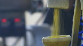 Πρόχειρα φαγητά γλυκού καλαμποκιού παραγωγής στο εργοστάσιο απόθεμα βίντεο