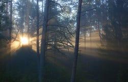 Πρόωρα ομίχλη και δέντρα ανατολής φθινοπώρου στοκ εικόνες με δικαίωμα ελεύθερης χρήσης