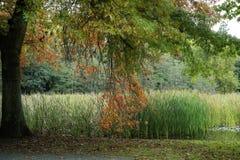 Πρόωρα χρώματα φθινοπώρου στο πάρκο Te Ko Utu (Te Koutu) Στοκ Εικόνες