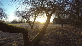 Πρόωρη ανατολή άνοιξη στον εγκαταλελειμμένο αγροτικό κήπο, χρονικό σφάλμα 4K φιλμ μικρού μήκους