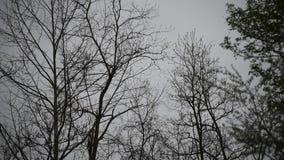 Πρόωρη βροχή άνοιξη στον τομέα απόθεμα βίντεο