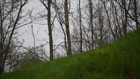 Πρόωρη βροχή άνοιξη στον τομέα φιλμ μικρού μήκους