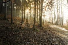 Πρόωρο ηλιοβασίλεμα άνοιξη με τις ακτίνες Θεών στον πιό forrest Στοκ φωτογραφία με δικαίωμα ελεύθερης χρήσης