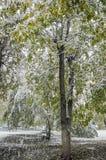 Πρόωρο χιόνι σε ένα πράσινο δέντρο Στοκ Εικόνες