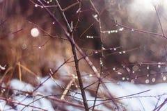 Πρόωρο thaw άνοιξη στο δάσος Στοκ εικόνα με δικαίωμα ελεύθερης χρήσης