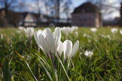 πρώιμη άνοιξη λουλουδιών Στοκ εικόνες με δικαίωμα ελεύθερης χρήσης