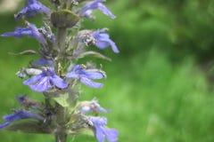 πρώιμη άνοιξη λουλουδιών Στοκ φωτογραφία με δικαίωμα ελεύθερης χρήσης