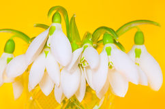 πρώιμη άνοιξη λουλουδιών Στοκ Φωτογραφία