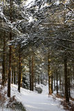 πρώιμη δασώδης περιοχή σκη&n Στοκ Εικόνες