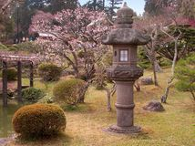 πρώιμη ιαπωνική άνοιξη κήπων Στοκ Εικόνες
