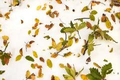 πρώιμος φυσικός χειμώνας &al Στοκ φωτογραφία με δικαίωμα ελεύθερης χρήσης