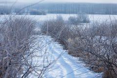 Πρώιμος χειμώνας, κρύο misty πρωί Στοκ εικόνες με δικαίωμα ελεύθερης χρήσης