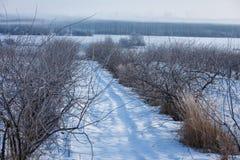 Πρώιμος χειμώνας, κρύο misty πρωί Στοκ εικόνα με δικαίωμα ελεύθερης χρήσης