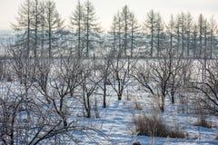 Πρώιμος χειμώνας, κρύο misty πρωί Στοκ Εικόνα