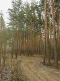 πρώιμο δασικό ίχνος της Ρωσίας φθινοπώρου Στοκ εικόνα με δικαίωμα ελεύθερης χρήσης