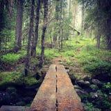 πρώιμο δασικό ίχνος της Ρωσίας φθινοπώρου Στοκ Φωτογραφίες