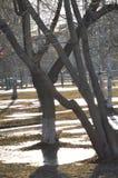 Πρώιμο ελατήριο στο πάρκο πόλεων στοκ εικόνες