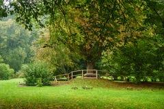 πρώιμο πάρκο φθινοπώρου Στοκ εικόνες με δικαίωμα ελεύθερης χρήσης