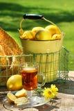 πρώιμο τσάι πρωινού λεμονιώ&n Στοκ Εικόνα