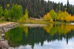 Πρώιμο φθινόπωρο στον κολπίσκο παπιών Αντανάκλαση των κίτρινων δέντρων σε μια λίμνη Στοκ Εικόνες