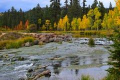 Πρώιμο φθινόπωρο στον κολπίσκο παπιών Δέντρα σημύδων κοντά σε ένα ρεύμα 3 Στοκ Εικόνες