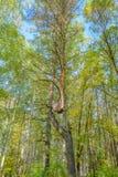 Πρώιμο φθινόπωρο στο δάσος Στοκ φωτογραφίες με δικαίωμα ελεύθερης χρήσης
