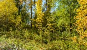 Πρώιμο φθινόπωρο στο δάσος Στοκ Εικόνες