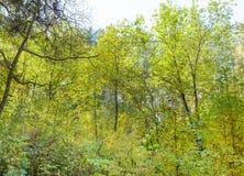 Πρώιμο φθινόπωρο στο δάσος Στοκ εικόνα με δικαίωμα ελεύθερης χρήσης