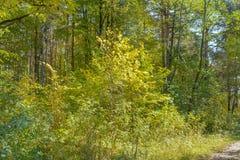 Πρώιμο φθινόπωρο στο δάσος Στοκ Εικόνα
