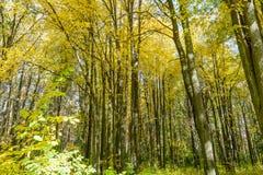 Πρώιμο φθινόπωρο στο δάσος Στοκ εικόνες με δικαίωμα ελεύθερης χρήσης