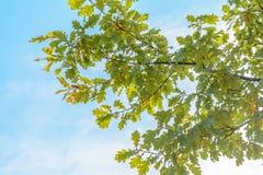 Πρώιμο φθινόπωρο στο δάσος Στοκ Φωτογραφίες