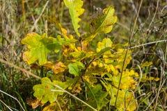 Πρώιμο φθινόπωρο στο δάσος Στοκ φωτογραφία με δικαίωμα ελεύθερης χρήσης