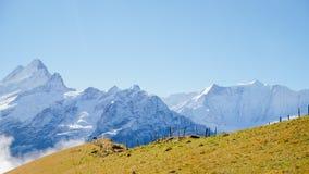 Πρώτα βουνά Ελβετία Στοκ Εικόνα