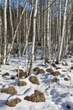 Πρώτα thaw τρύπες Στοκ φωτογραφία με δικαίωμα ελεύθερης χρήσης