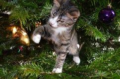 Πρώτα Χριστούγεννα για ένα γατάκι Στοκ εικόνα με δικαίωμα ελεύθερης χρήσης