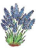πρώτες ανοίξεις λουλο&upsi Στοκ Εικόνα