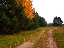 Πρώτες ημέρες του φθινοπώρου - πορτοκαλί δέντρο χρώματος στοκ φωτογραφίες