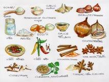 Πρώτες ύλες καρυκευμάτων που μαγειρεύουν τη ζωγραφική watercolor Στοκ Φωτογραφίες