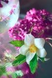 πρώτη άνοιξη λουλουδιών Στοκ Εικόνα