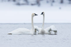 πρώτη θέα αγάπης Στοκ εικόνα με δικαίωμα ελεύθερης χρήσης