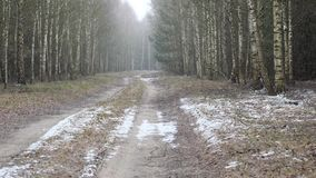 Πρώτος ο χιονισμένος το έδαφος στη σημύδα φιλμ μικρού μήκους