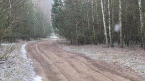 Πρώτος ο χιονισμένος το έδαφος στη σημύδα απόθεμα βίντεο