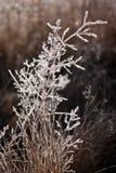Πρώτος παγετός στο λιβάδι πριν από το χειμερινό ερχομό Στοκ Εικόνα