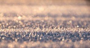 Πρώτος παγετός φέτος Στοκ Φωτογραφία