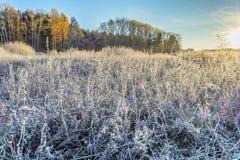 Πρώτος παγετός Στοκ Εικόνες