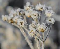 Πρώτος παγετός Στοκ εικόνες με δικαίωμα ελεύθερης χρήσης