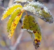 Πρώτος παγετός Στοκ φωτογραφίες με δικαίωμα ελεύθερης χρήσης